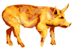pig. watercolors brendan garbee