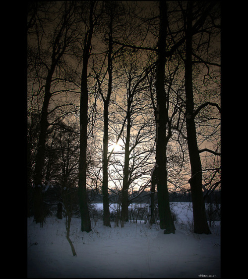 Winter sunset through trees by Ben Jones. on Flickr.