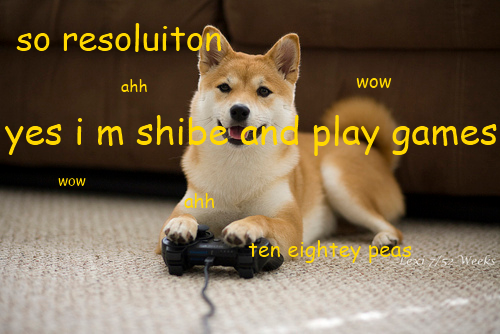 shibs r cute 2
