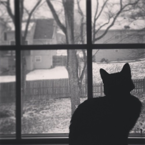 Bird- & snow-watching. #cat #catsofinstagram #blackcat #winter #snow #instacat #instapet #pet #silhouette #window #weather