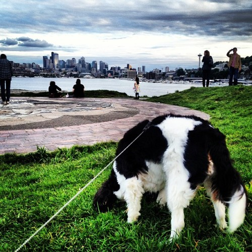 Ella being all #majestic #seattle #cavalier #dogs #parks #gasworks