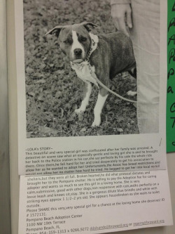 If anybody is in the South FL region- PLEASE HELP! This dog is in desperate need of a home and has such a sweet temperment! Perfect, loving family dog- please share and help spread word if possible. This poor sweetie shouldn't have to loose her life because of irresponsible owners.