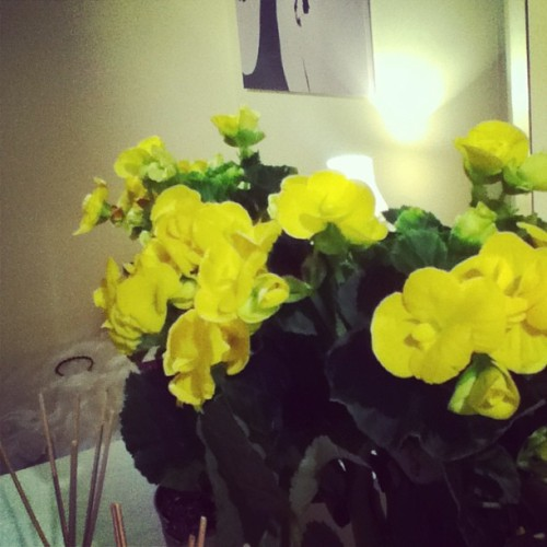 So cute when @_joshwintle drops flowers round to me 🙊🙊🙊🙊