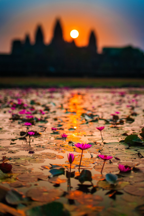 evocativesynthesis:  Angkor Wat (by klOrklOr)