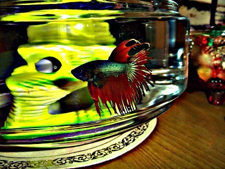 Rest In Peace dear Kent. I know you are happily swimming in fishy heaven….but I still miss you!
