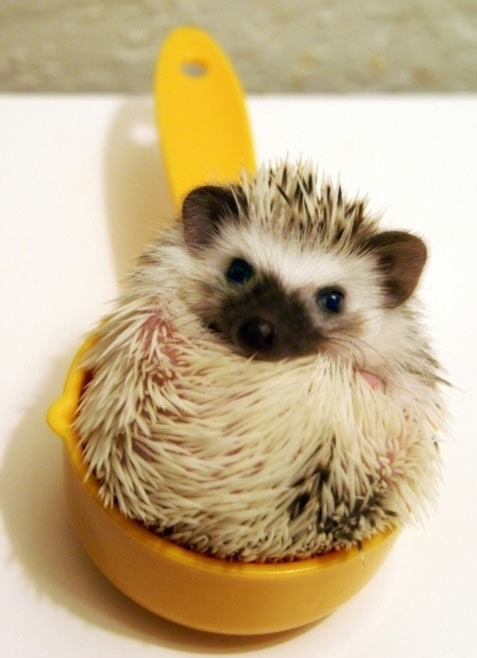 This recipe calls for a cup of hedgehog.