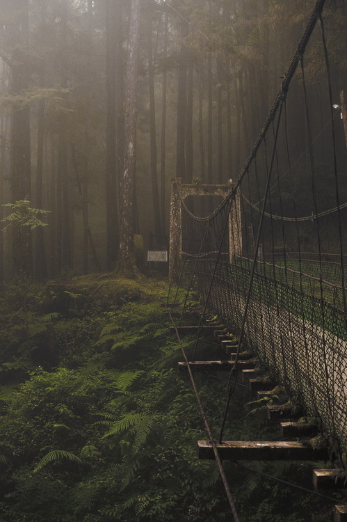 bluepueblo:  Forest Bridge, Japan photo via nat