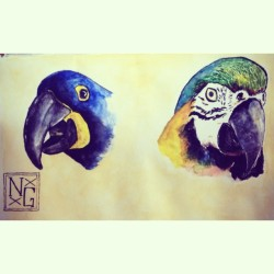 Hyacinth Macaw and Blue & Yellow Macaw from the last while.