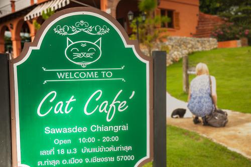 cat cafe in chiang rai