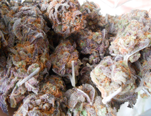 larnbey:  bag of purp