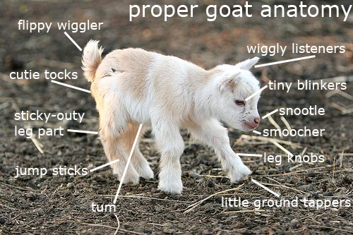 princessofworms:  im a scientist and very important to know goat part