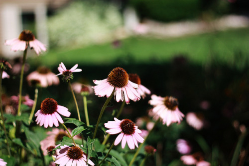 arquerio:untitled by lauren welter on Flickr.