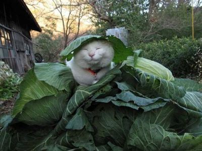 """mmmm, these veggies are giving me wisdom"""