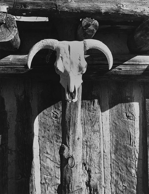 endlessme:  Todd Webb - Cow Skull, Santa Fe, New Mexico, 1962