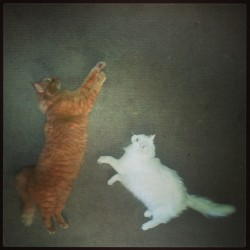 LaFlying cats or lazy cats? #catstagram