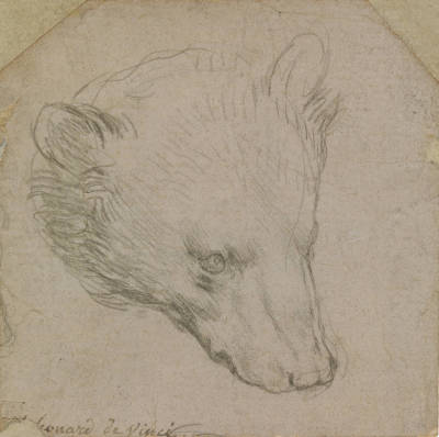 Leonardo da Vinci: Study of a Bear's Head
