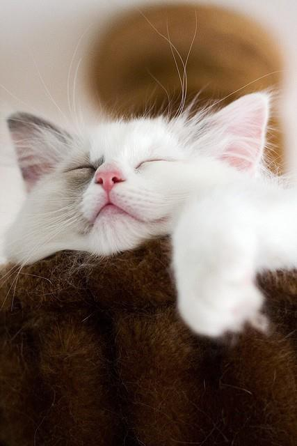 magicalnaturetour:  Sweet Dreaming via Amolife ~ Sweet Dreams beautiful friends ♥