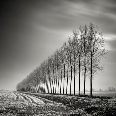 Photoblog Spotlight: Pierre Pellegrini See more of his tree landscapes in long exposure.