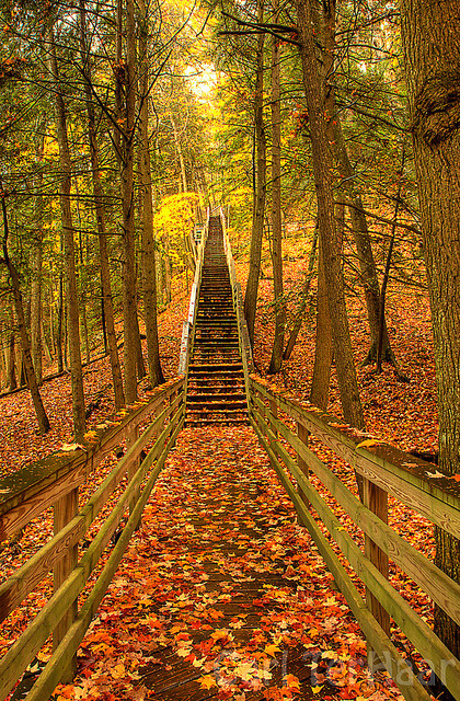 ephemrx:  Stairs to Iargo Springs by yooper1949 on Flickr.