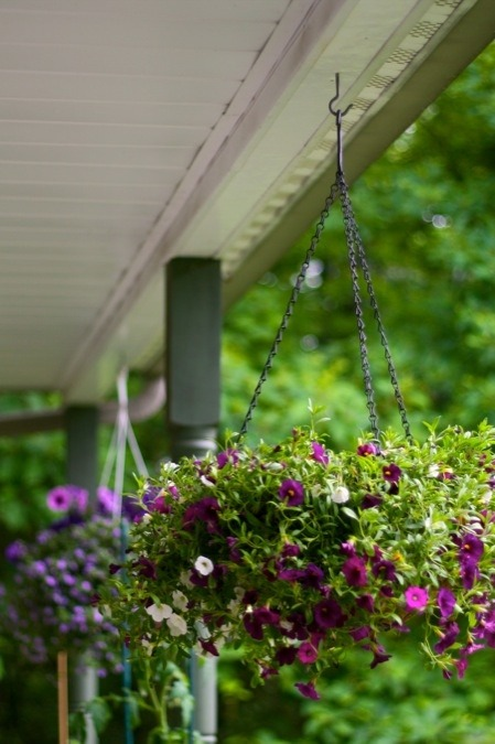 pictureperfectforyou:  (via Hanging Baskets | Chiot's Run)