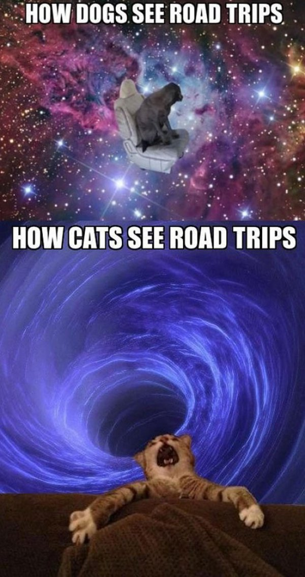 collegehumor:  2 animals. 2 Dimensions. Both Trippy.
