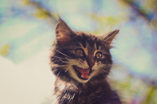 photogenicfelines:  (N'Grid)