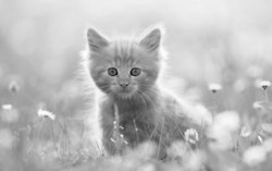 kittenskittenskittenss:  http://adf.ly/GGIwb   This is a cute kitten(: