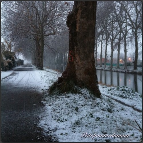 Bords du canal du midi sous la neige#villeneuvelesbeziers #herault #sud #france #languedoc #neige #snow #hiver #hivers #winter #photodujour #picoftheday #photooftheday #amazingshot