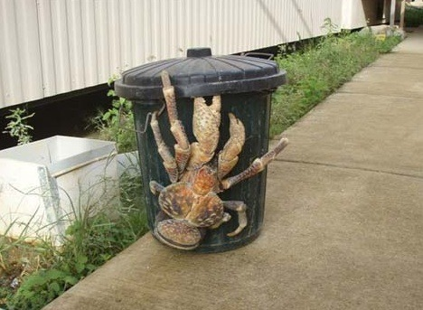 treemigration:  coconut crab on a trash can.