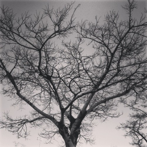 Wonderful tree skeleton (at Rainbow Park)