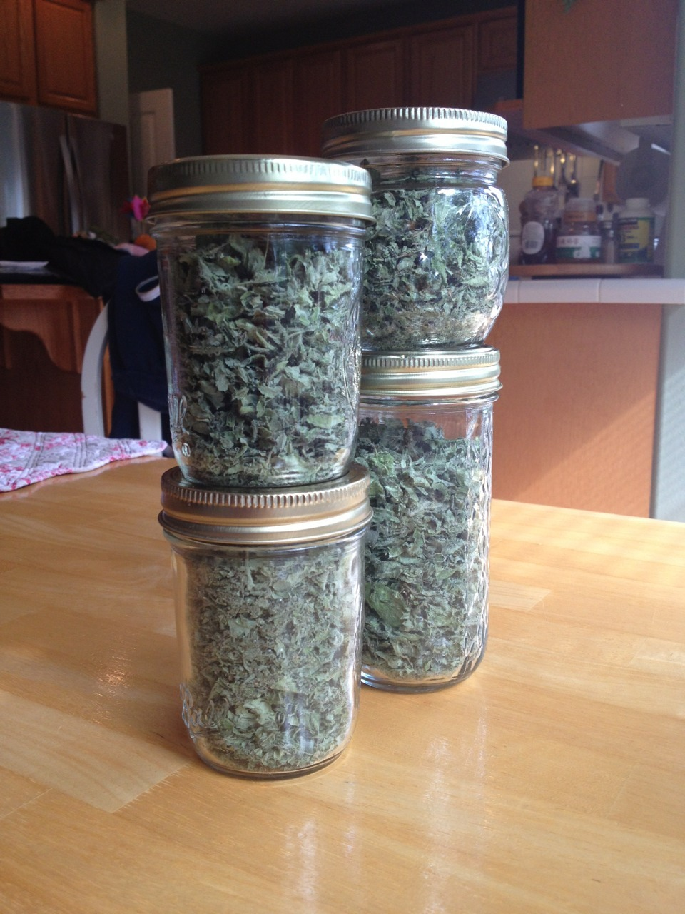 smart-gardener:  just-a-sprinkle-of-starlight:  Oreganooooo!! 🌿🌿😄 After drying it for a few days, I shucked it, jarred it, and am now planning something to use it in. Home-dried herbs are the best 😊😊  Oh fantastic! I'd love to know what you cook it up in! I love oregano in pretty much anything — soups, beans, pasta, sauces…