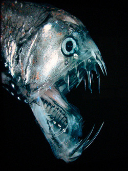 itisajojodream:  Steampunk Tendencies-Terrifying Deep Sea Creatures to Feed your Nightmares | via Tumblr on We Heart It. http://weheartit.com/entry/60967658