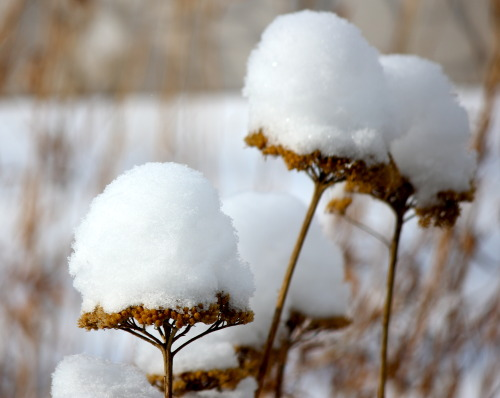 Even in winter an isolated patch of snow has a special quality. Andy Goldsworthy