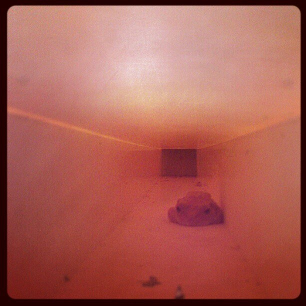 I see you sneaky #frog hiding in our shack roof! #cute #froggy #sleepy