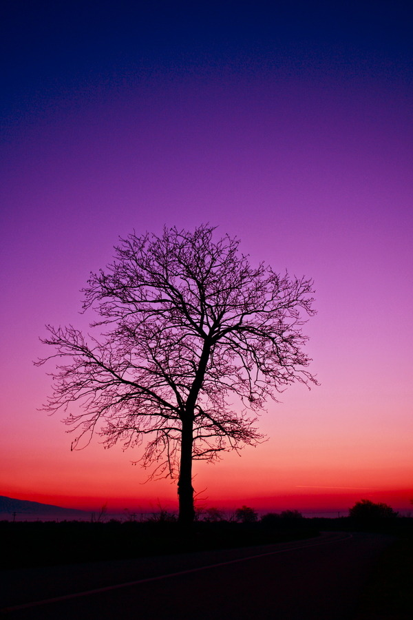 0mnis-e:  Tree, By Nikos Metaxiotis