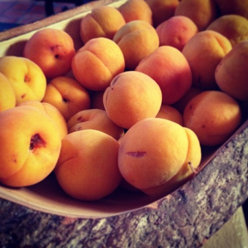 beradiantlyraw:  Fresh from the tree! #apricots #fruit