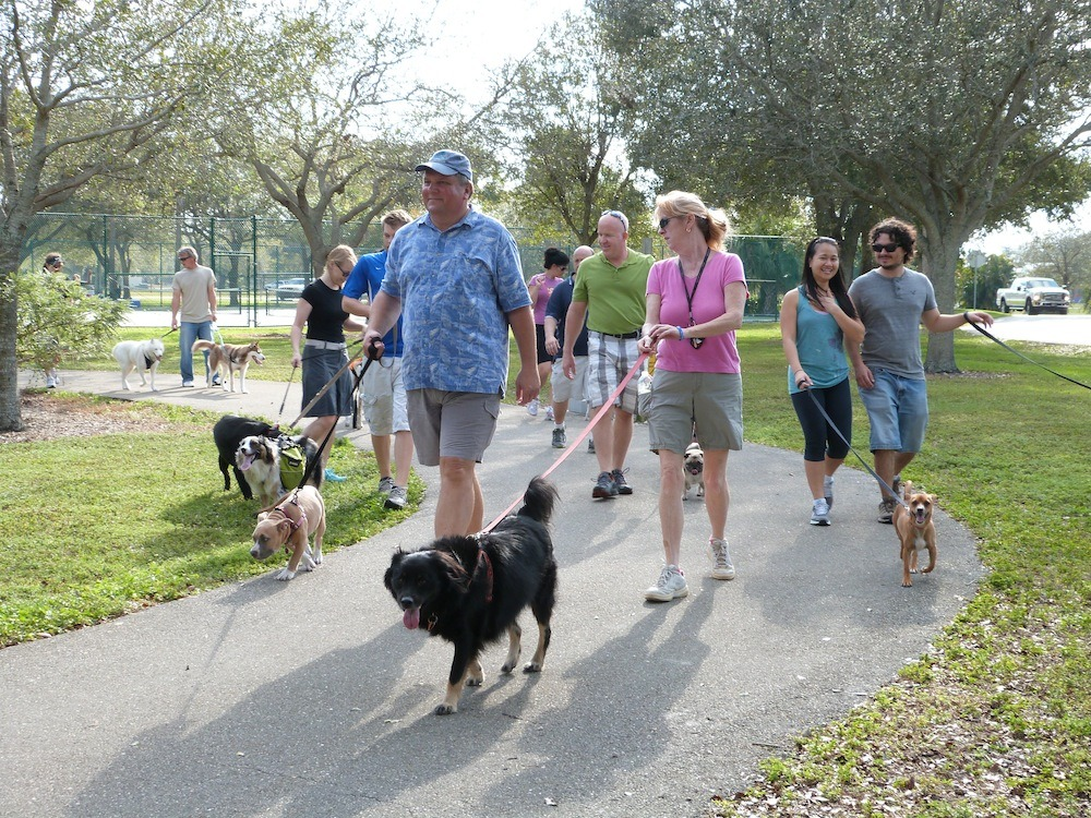 Pack Walk in the Park (January 2013) - South Florida Pack Walk Meetup Group, Hollywood, FL
