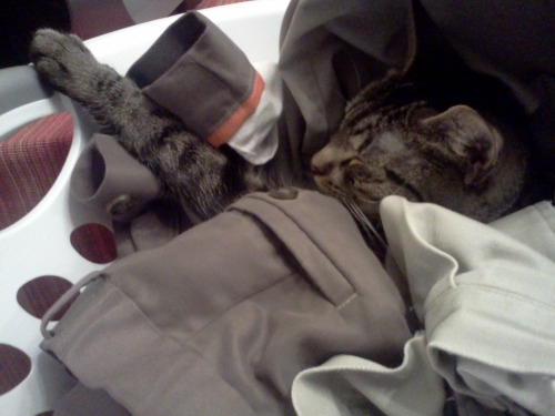 get out of there cat, you are not dirty laundry. you're too cute to be a sock.