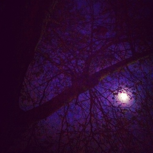 Night jog with my moon & my trees #love #fitness #nature #fullmoon #trees #mymoon #californiagirl #californialove