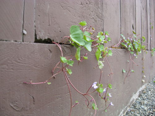 Escape Plans on Flickr.[Image: A very determined vine creeps out between the cracks of a fence.] I slept for a really long time last night, yet, when I woke up, none of the world's problems were solved. This whole sleep thing may be overrated.