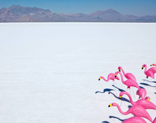 Plastic Pink Flamingos on Bonneville Salt Flats Photo:Paul Edmondson/© Corbis. All Rights Reserved.