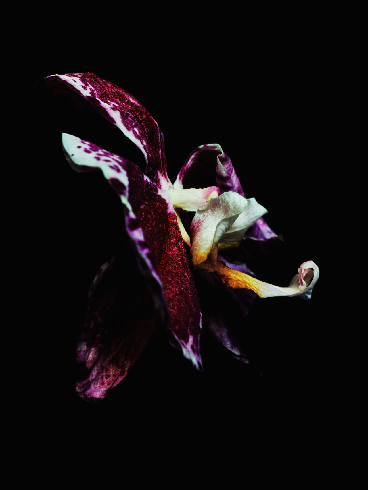 Decaying orchid was shot by Billy Kidd.