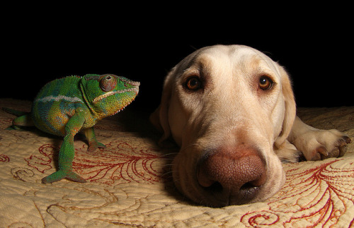 theanimalblog:  Friends. Photo by Scott Cromwell