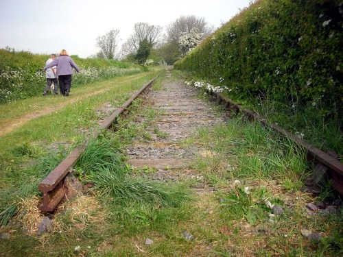 "ONE UPRIGHT ARM  We move together along the disused railway track towards the top of the Swannington Incline.  ""Don't look the dog in the eyes. He don't like it""  one upright arm sustains the cheek come walk with me  when things go wrong there's always the hedgerow  Paul Conneally 2011   From 'Health Walk' with Nita Pearson 'Whitwick to Swannington and Back' May 2011  Previous post in this series ""So Looked Cecilia'  —————————————————  Notes  The line:  'one upright arm sustains the cheek'  Is a fragment from  ""HOW RICH THAT FOREHEAD'S CALM EXPANSE"" by William Wordsworth. Wordsworth tells us that the poem HOW RICH THAT FOREHEAD'S CALM EXPANSE was inspired by a print at Coleorton Hall, North West Leicestershire. Mrs Wordsworth's impression was that HOW RICH THAT FOREHEAD'S CALM EXPANSE was also written at Coleorton Hall despite William's note that it was written at Rydal Mount in the Lake District."