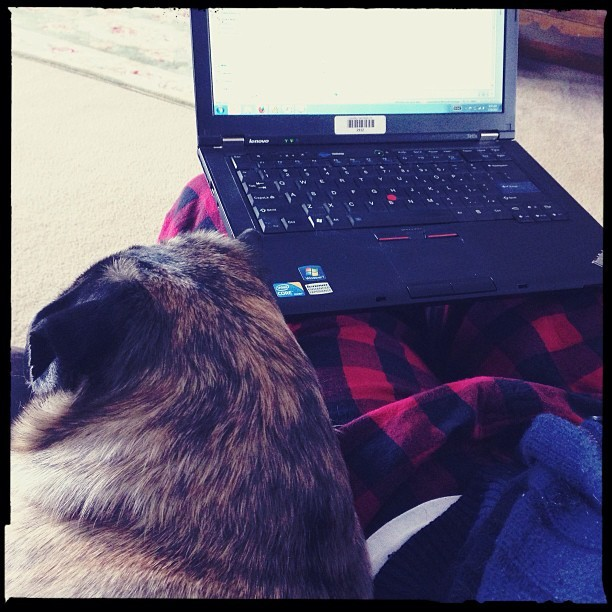 Thank you Spring snow for the ability to work like this!  #baxter #pug #pugs #pugsofinstagram #dog #dogs #dogsofinstagram #snow