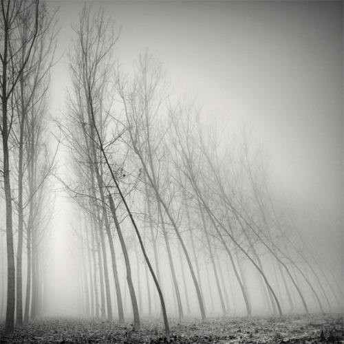 weandthecolor:  Tree Landscapes - Long Exposure Photography The foggy atmosphere of the black and white tree photographs by Swiss photographer Pierre Pellegrini convey a feeling of coldness and timelessness. More photographs on WE AND THE COLORWATC//Facebook//Twitter//Google+//Pinterest