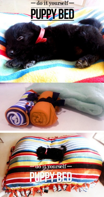 truebluemeandyou:  DIY Cheap and Easy Pet Bed Tutorial from Made in Pretoria here. This uses the same technique for making those fleece blankets. Please watch your dogs with any toys or beds with ties like these. You don't want to spend $1,000 on surgery to get non food items out of your dog (from painful personal experience). For lots more PET DIYs from water bowls to mud mittens to cat houses go here: truebluemeandyou.tumblr.com/tagged/pets