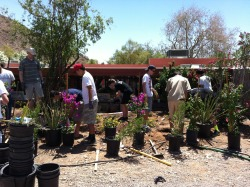 A group of Eagle Scouts volunteered at Taliesin West. The Scouts planted a garden outside John Rattenbury's apartment. Rattenbury was a founding member of the Taliesin Fellowship and is still an active Taliesin community member today. Thank you to the Eagle Scouts for their service and commitment to Taliesin West.