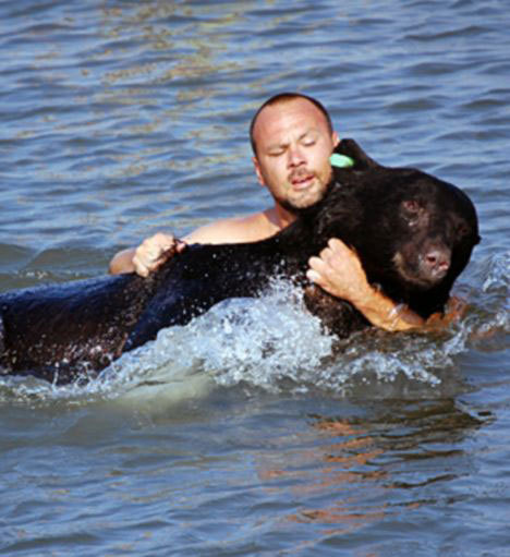 """Man Saves 375 lbs Black Bear from Drowning (with Photos and Video). Florida Fish and Wildlife Conservation Commission biologist Adam Warwick just couldn't let the bear drown, so he took off his shirt and dive after it. The 375 lbs black bear had been spotted in a residential area, obviously looking for food, and was shot with a tranquilizer dart. Unfortunately, before it went under, it jumped in the water of the Gulf of Mexico.""""After watching the dramatic rescue effort unfold, local resident Thad Brett brought his digger to the beachfront to carry the bear away."""" via TreeHugger :) ~ Thank you prickylegs for bringing this sweet story to me.  I love it, and it's nice to hear a happy story for a change!"""