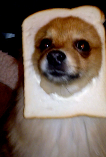 I breaded my doggy instead :D